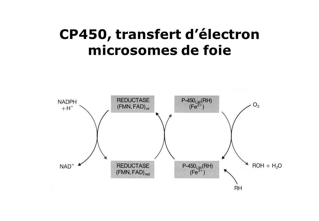 CP450, transfert délectron microsomes de foie