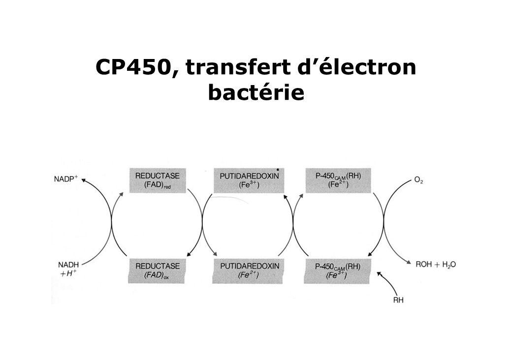 CP450, transfert délectron bactérie