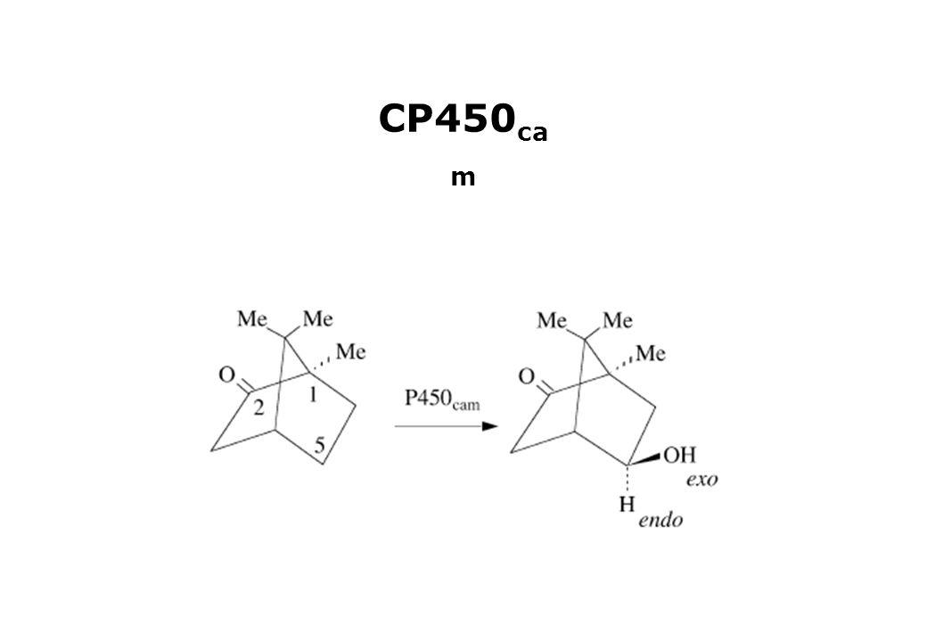 CP450 ca m