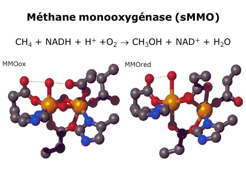 Méthane monooxygénase (sMMO) CH 4 + NADH + H + +O 2 CH 3 OH + NAD + + H 2 O MMOox MMOred