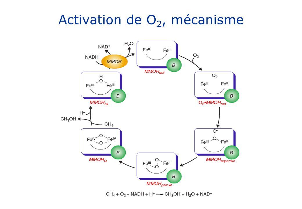 Activation de O 2, mécanisme