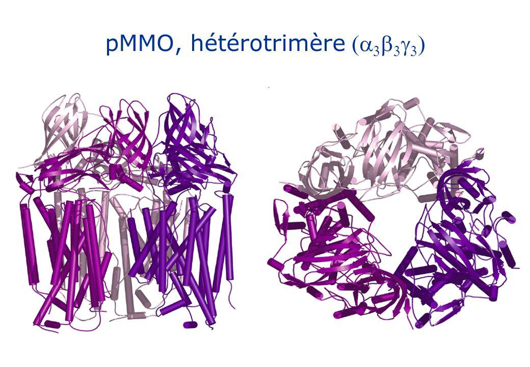 pMMO, hétérotrimère