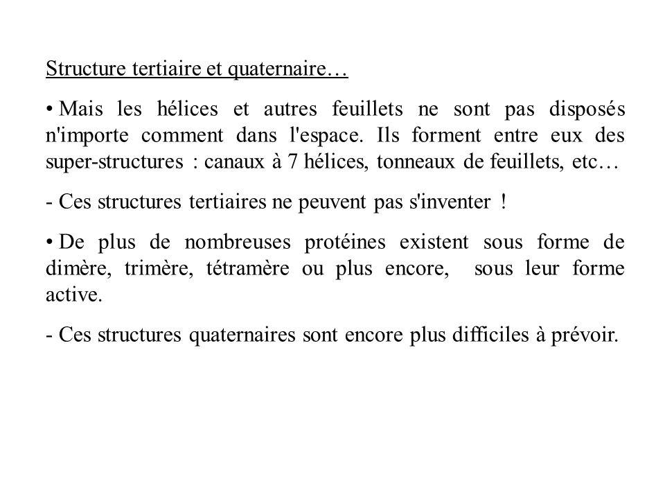 Structure tertiaire et quaternaire… Mais les hélices et autres feuillets ne sont pas disposés n'importe comment dans l'espace. Ils forment entre eux d