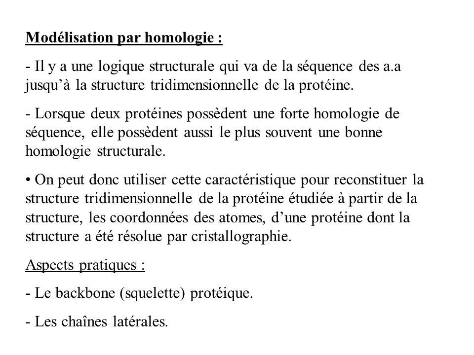 Modélisation par homologie : - Il y a une logique structurale qui va de la séquence des a.a jusquà la structure tridimensionnelle de la protéine. - Lo