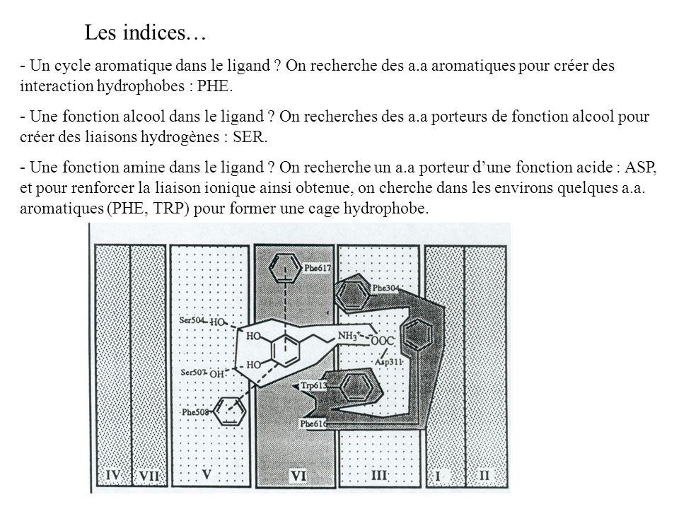 Les indices… - Un cycle aromatique dans le ligand ? On recherche des a.a aromatiques pour créer des interaction hydrophobes : PHE. - Une fonction alco
