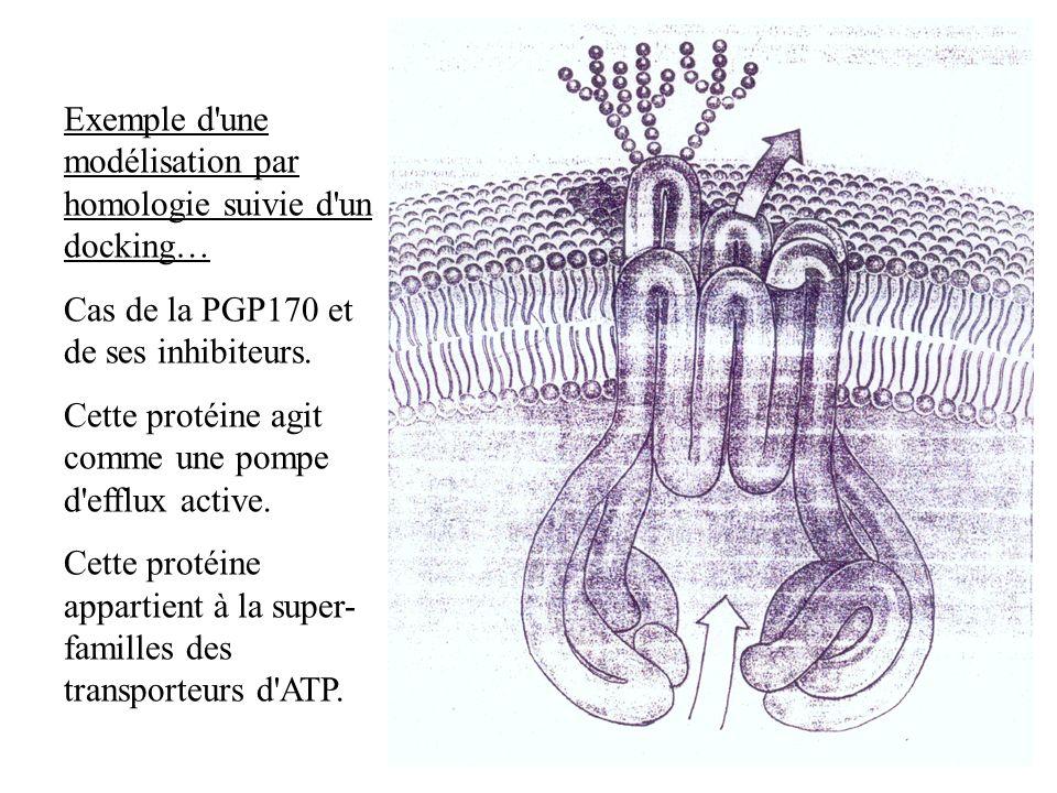 Exemple d'une modélisation par homologie suivie d'un docking… Cas de la PGP170 et de ses inhibiteurs. Cette protéine agit comme une pompe d'efflux act