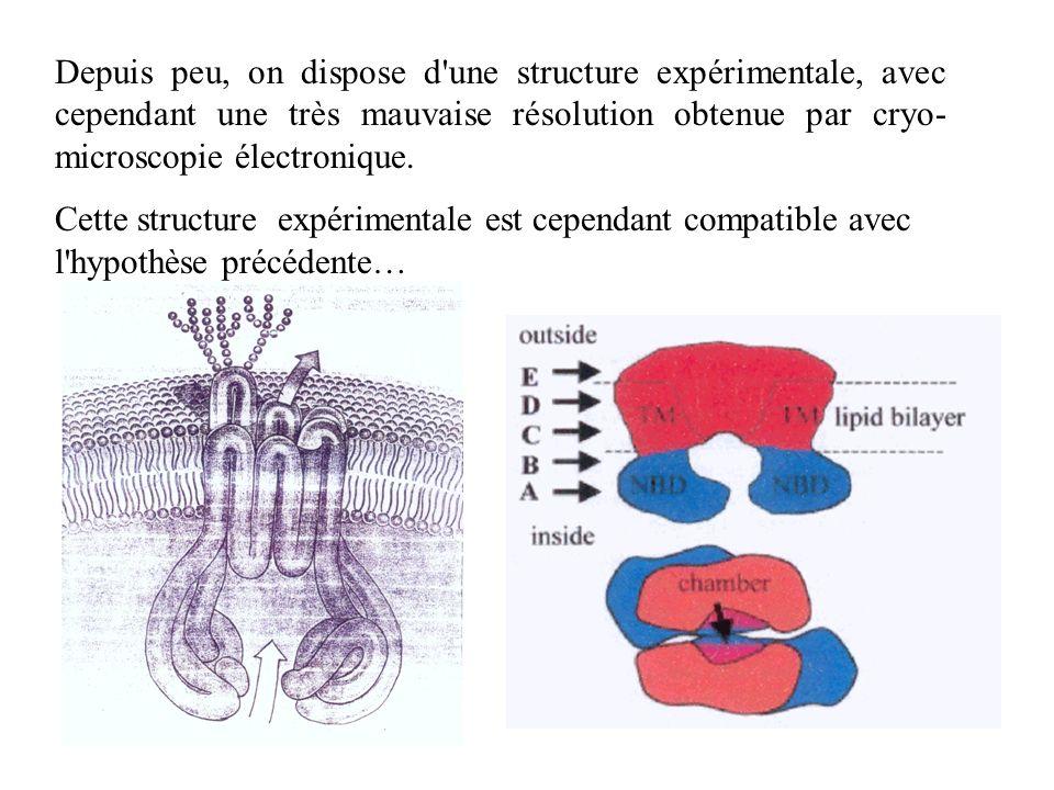 Depuis peu, on dispose d'une structure expérimentale, avec cependant une très mauvaise résolution obtenue par cryo- microscopie électronique. Cette st