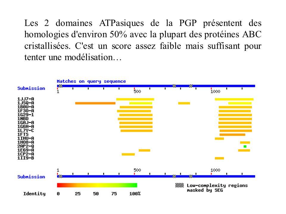 Les 2 domaines ATPasiques de la PGP présentent des homologies d'environ 50% avec la plupart des protéines ABC cristallisées. C'est un score assez faib