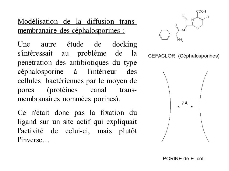 Modélisation de la diffusion trans- membranaire des céphalosporines : Une autre étude de docking s'intéressait au problème de la pénétration des antib