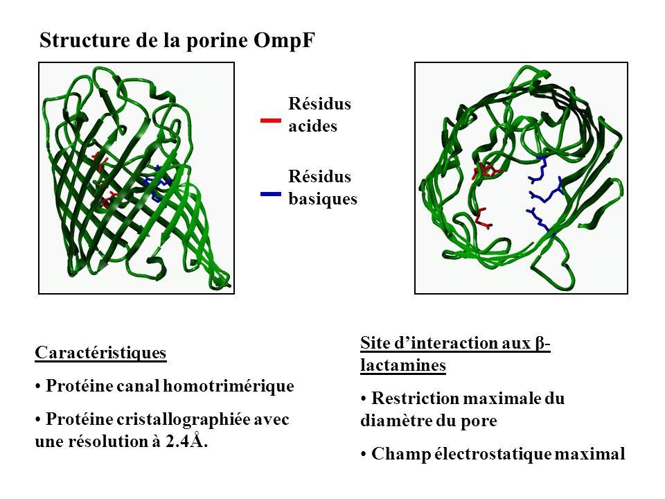 Structure de la porine OmpF Caractéristiques Protéine canal homotrimérique Protéine cristallographiée avec une résolution à 2.4Å. Site dinteraction au