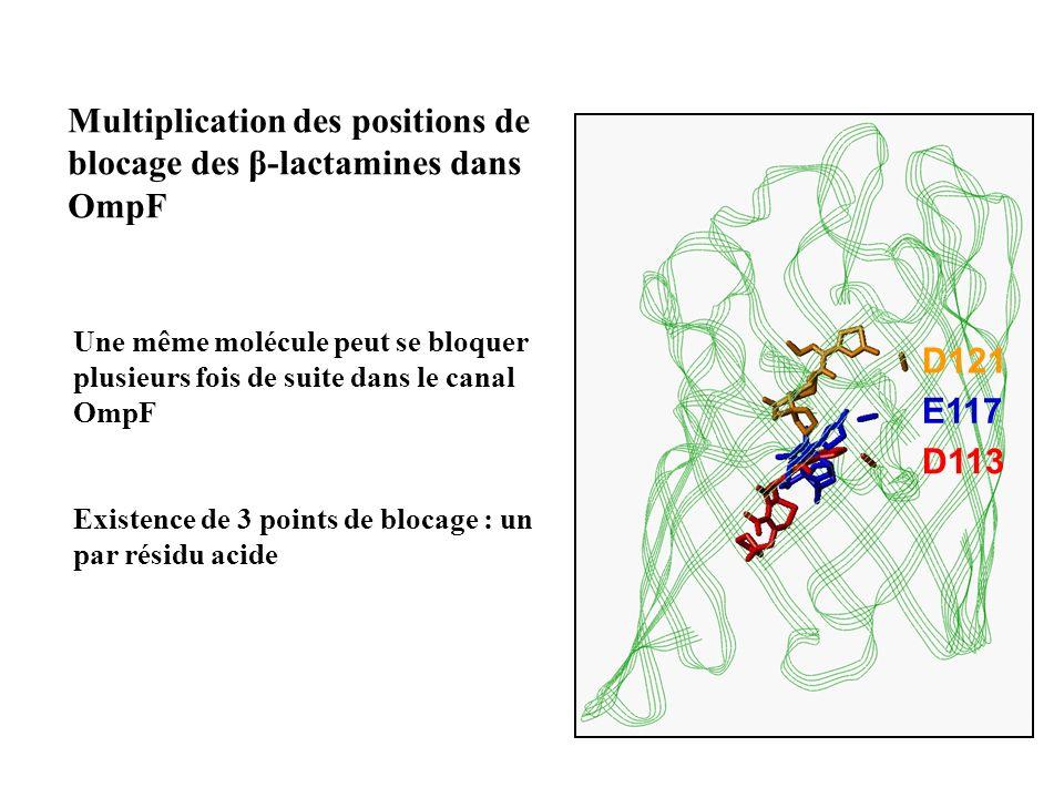 Multiplication des positions de blocage des β-lactamines dans OmpF Existence de 3 points de blocage : un par résidu acide Une même molécule peut se bl
