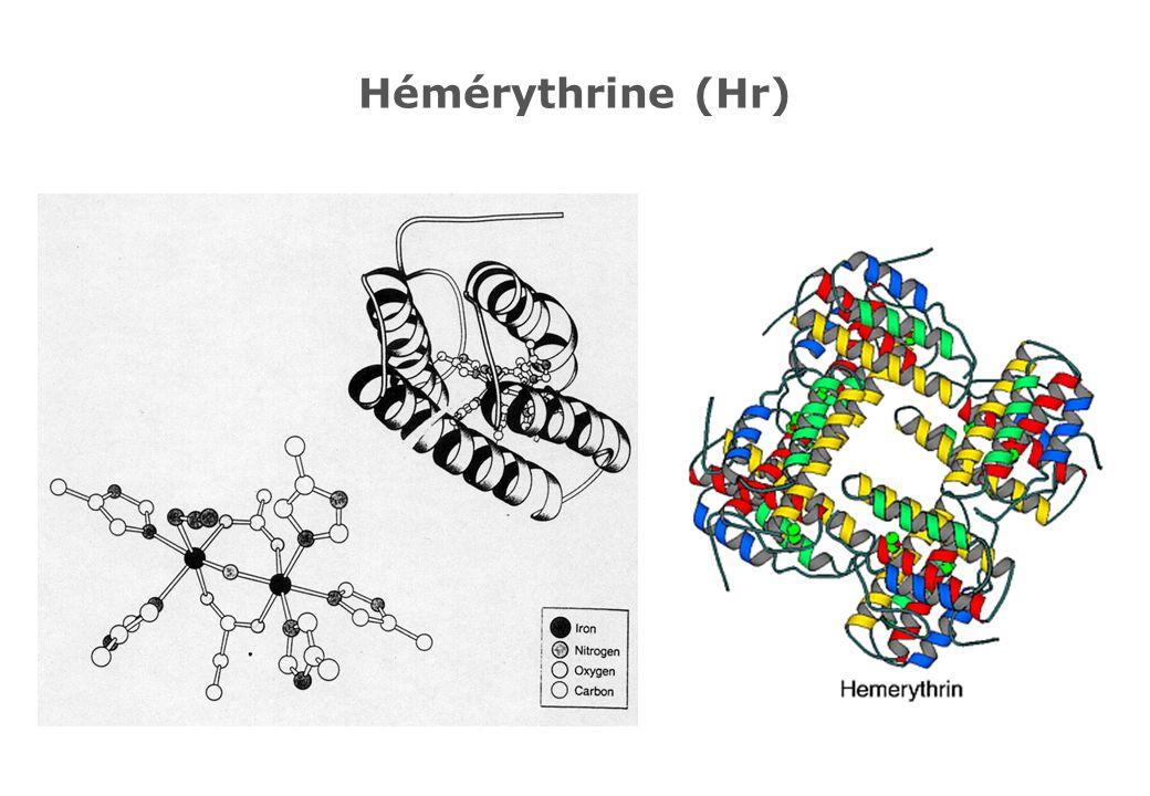 Hémérythrine (Hr)