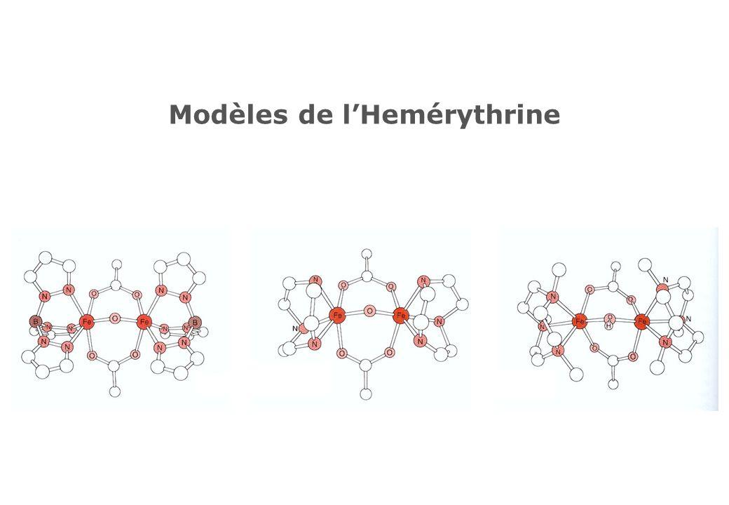 Modèles de lHemérythrine