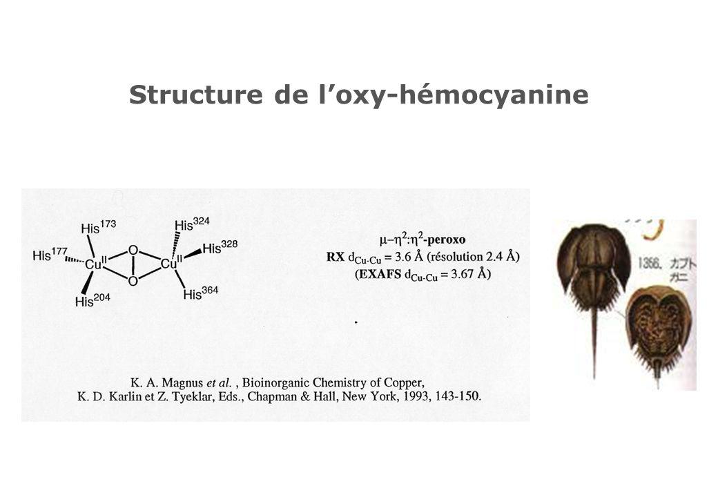 Structure de loxy-hémocyanine