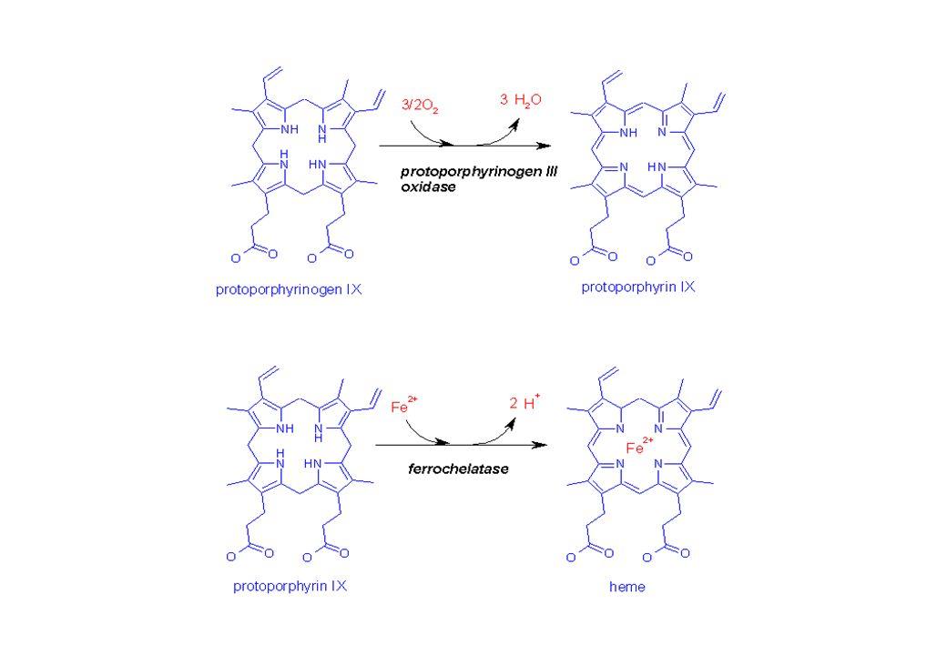 Coopérativité deoxy-Hboxy-Hb