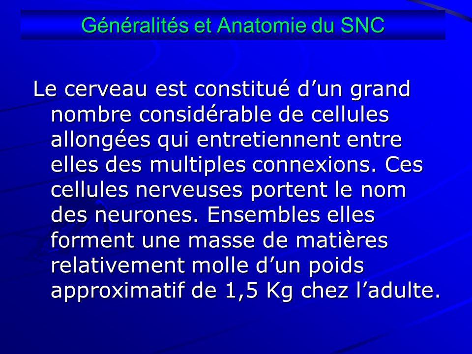 Le cerveau est constitué dun grand nombre considérable de cellules allongées qui entretiennent entre elles des multiples connexions. Ces cellules nerv
