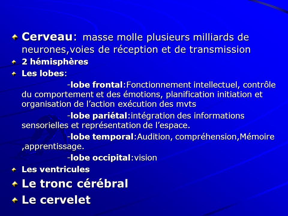 Cerveau: masse molle plusieurs milliards de neurones,voies de réception et de transmission 2 hémisphères Les lobes: -lobe frontal:Fonctionnement intel