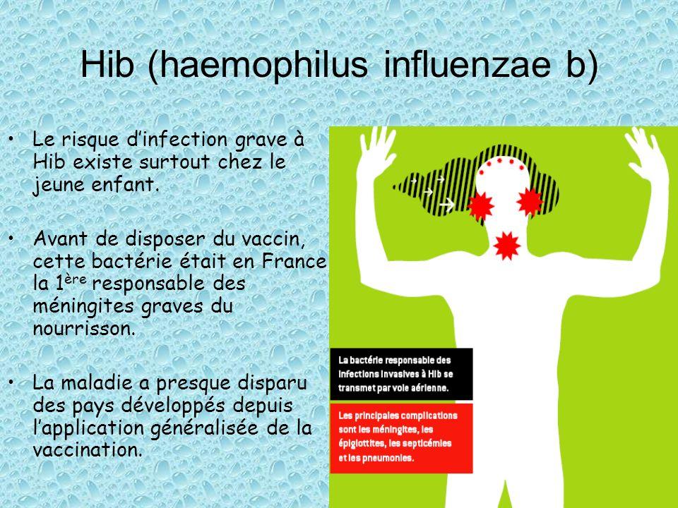 Hib (haemophilus influenzae b) Le risque dinfection grave à Hib existe surtout chez le jeune enfant. Avant de disposer du vaccin, cette bactérie était