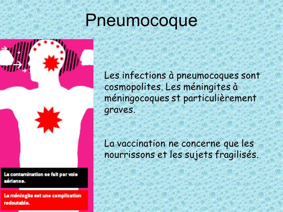 Pneumocoque Les infections à pneumocoques sont cosmopolites. Les méningites à méningocoques st particulièrement graves. La vaccination ne concerne que