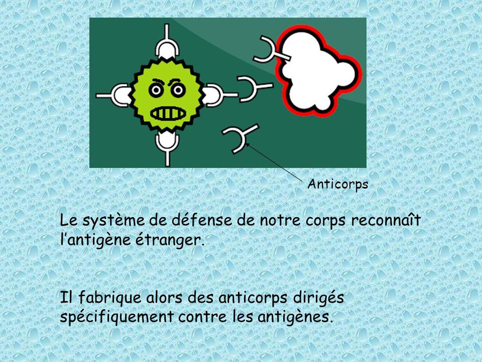 Le système de défense de notre corps reconnaît lantigène étranger. Il fabrique alors des anticorps dirigés spécifiquement contre les antigènes. Antico