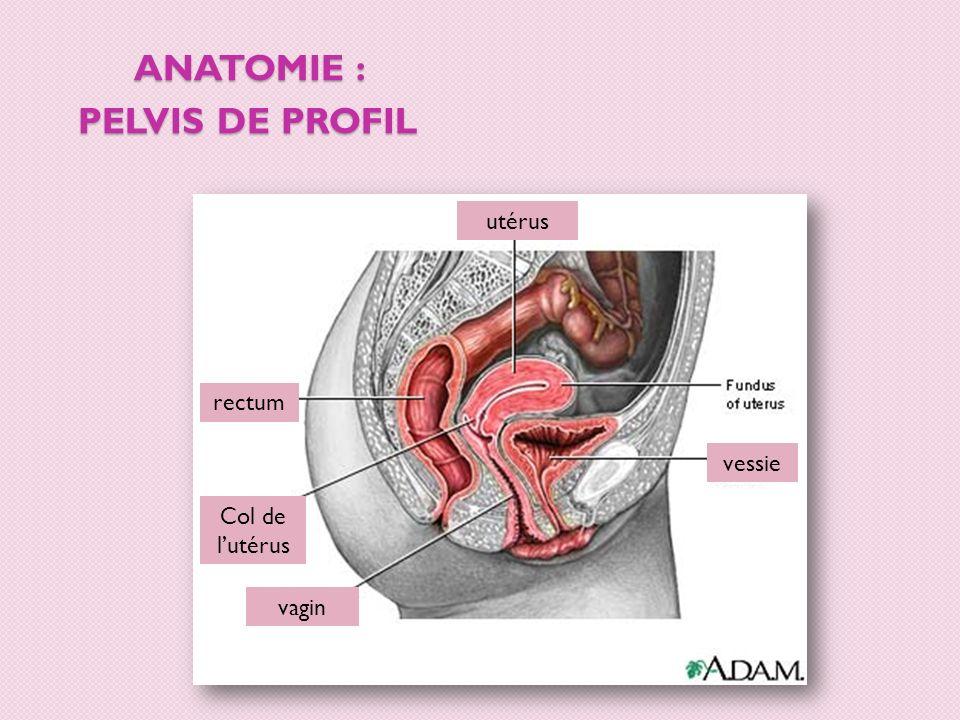 ANATOMIE : PELVIS DE PROFIL ovaire intestin utérus k col de lutérus rectum anus vagin urètre clitoris os vessie trompe de Fallope