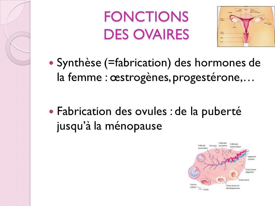 FONCTIONS DES OVAIRES Synthèse (=fabrication) des hormones de la femme : œstrogènes, progestérone,… Fabrication des ovules : de la puberté jusquà la m