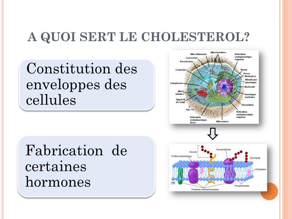 A QUOI SERT LE CHOLESTEROL? Constitution des enveloppes des cellules Fabrication de certaines hormones