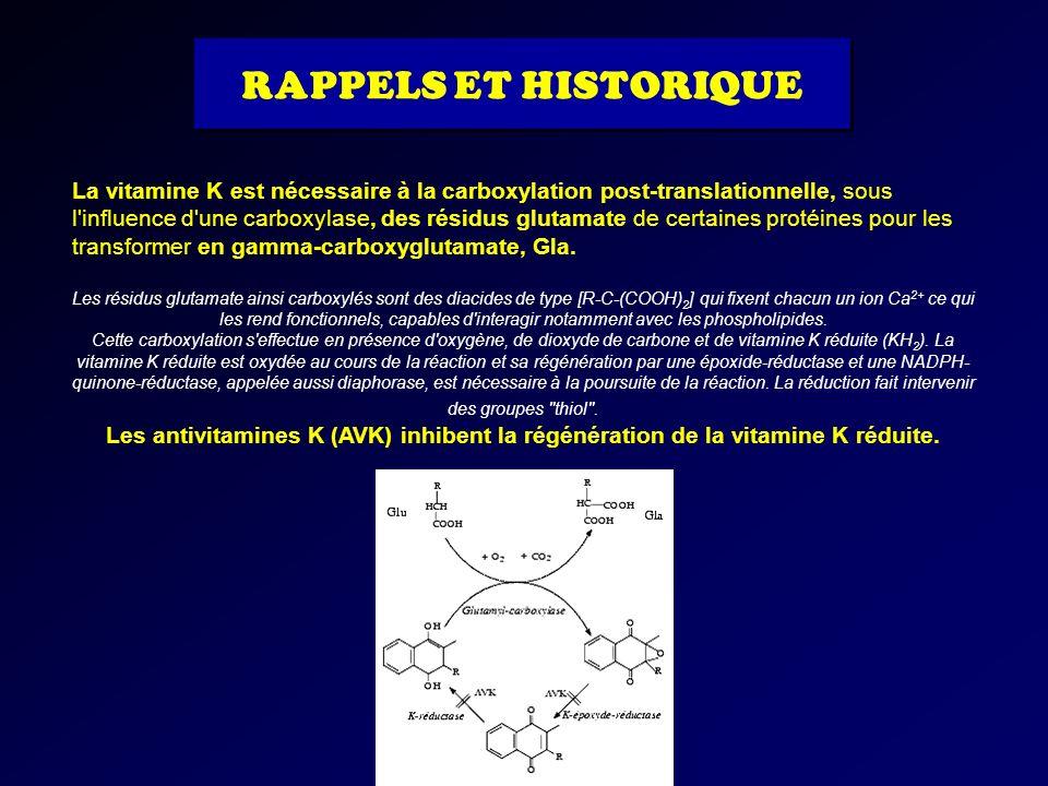 La vitamine K est nécessaire à la carboxylation post-translationnelle, sous l'influence d'une carboxylase, des résidus glutamate de certaines protéine