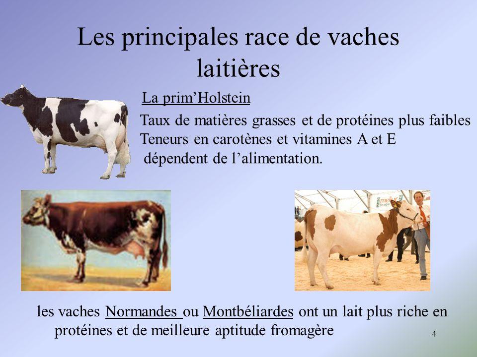 4 Les principales race de vaches laitières La primHolstein Taux de matières grasses et de protéines plus faibles Teneurs en carotènes et vitamines A e