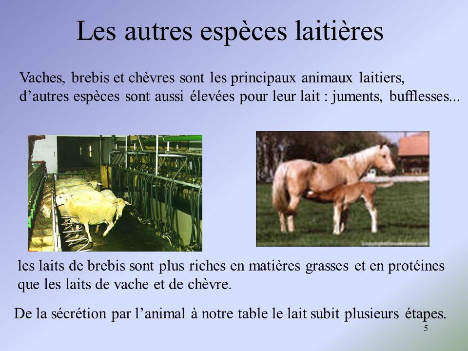 5 Les autres espèces laitières Vaches, brebis et chèvres sont les principaux animaux laitiers, dautres espèces sont aussi élevées pour leur lait : jum