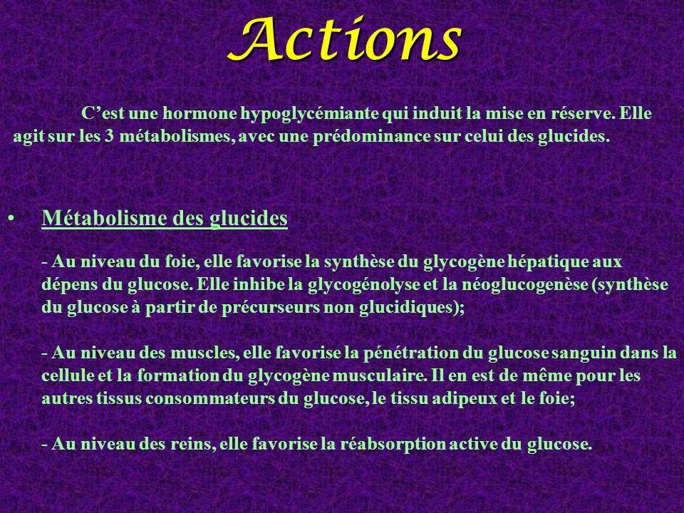 Actions Métabolisme des glucides - Au niveau du foie, elle favorise la synthèse du glycogène hépatique aux dépens du glucose. Elle inhibe la glycogéno