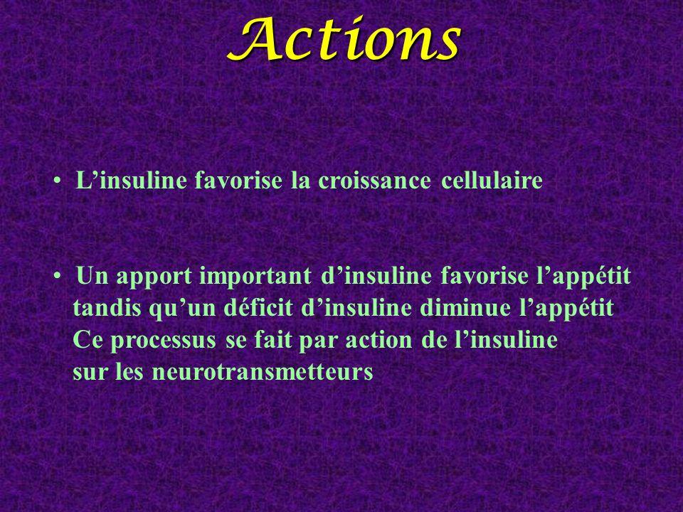 Linsuline favorise la croissance cellulaire Un apport important dinsuline favorise lappétit tandis quun déficit dinsuline diminue lappétit Ce processu