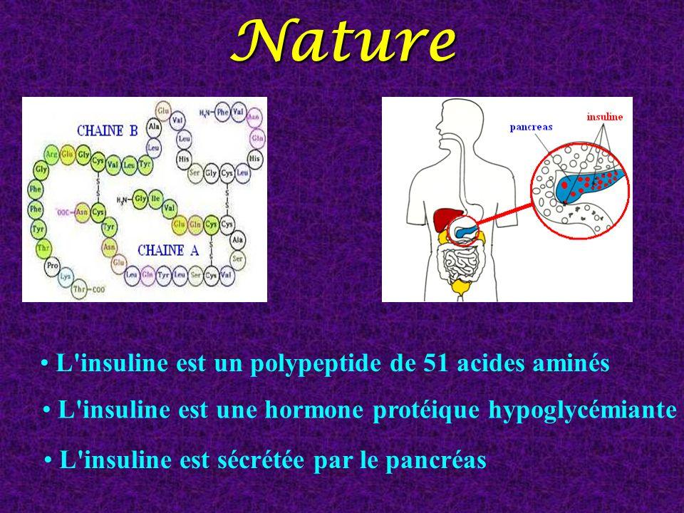 Nature L'insuline est un polypeptide de 51 acides aminés L'insuline est une hormone protéique hypoglycémiante L'insuline est sécrétée par le pancréas
