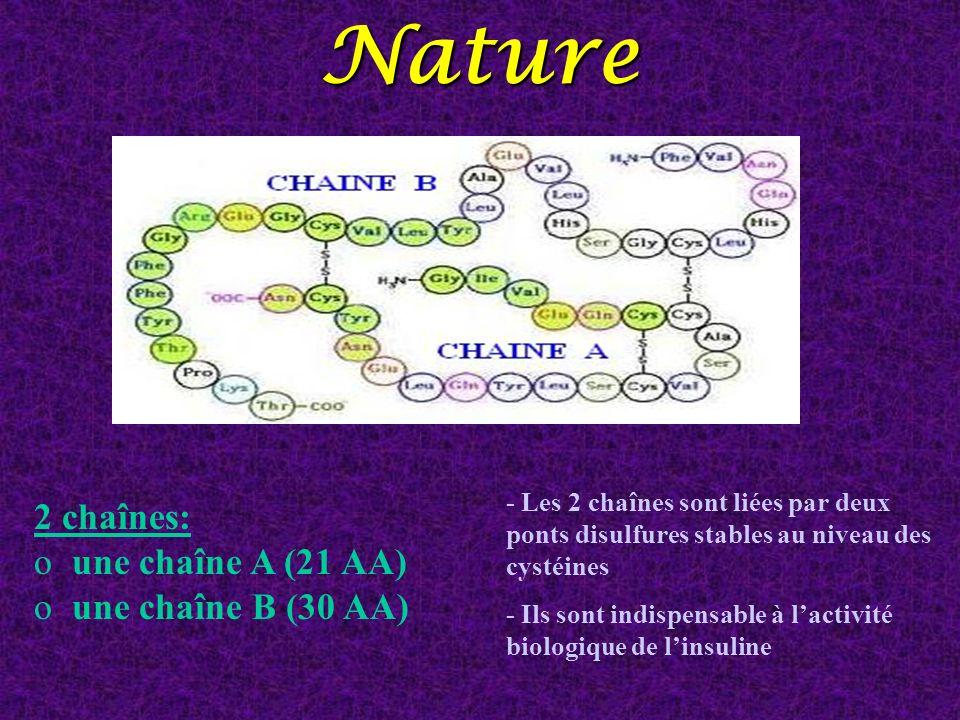 Nature - Les 2 chaînes sont liées par deux ponts disulfures stables au niveau des cystéines - Ils sont indispensable à lactivité biologique de linsuli