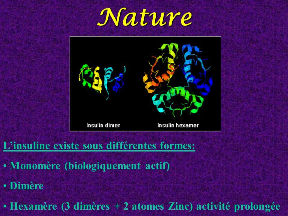 Nature Linsuline existe sous différentes formes: Monomère (biologiquement actif) Dimère Hexamère (3 dimères + 2 atomes Zinc) activité prolongée