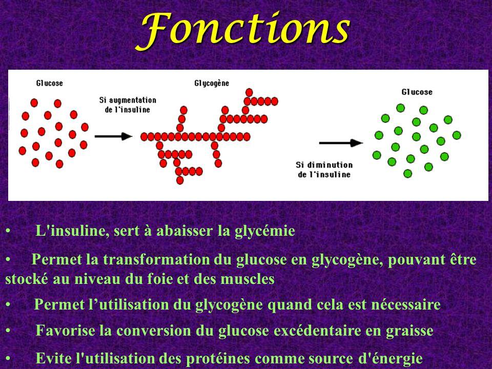 Fonctions L'insuline, sert à abaisser la glycémie Evite l'utilisation des protéines comme source d'énergie Permet la transformation du glucose en glyc