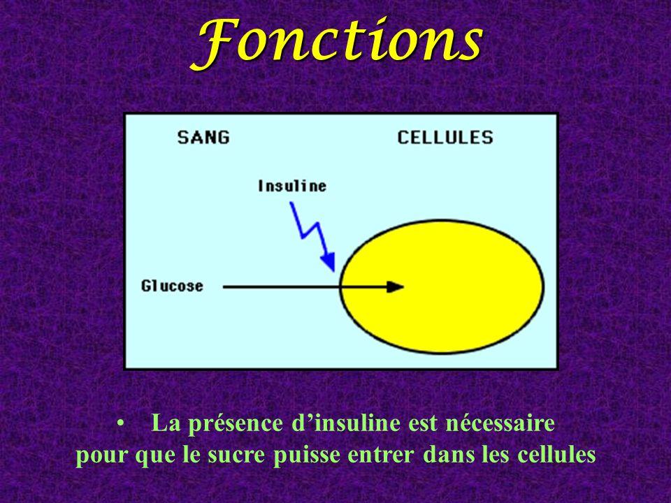 Fonctions La présence dinsuline est nécessaire pour que le sucre puisse entrer dans les cellules