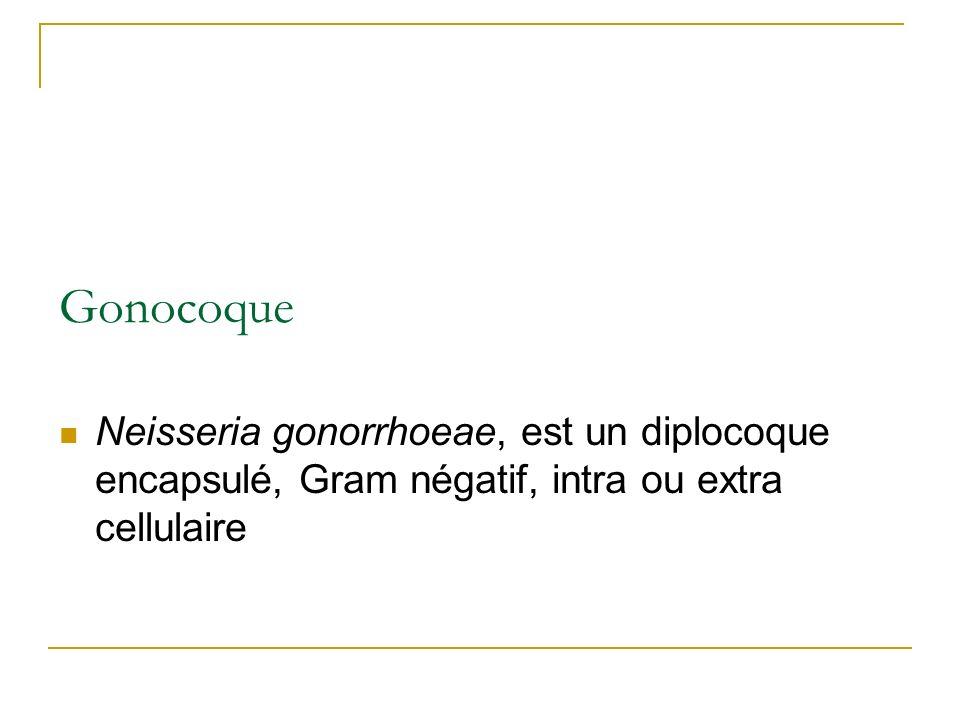 Gonocoque Neisseria gonorrhoeae, est un diplocoque encapsulé, Gram négatif, intra ou extra cellulaire