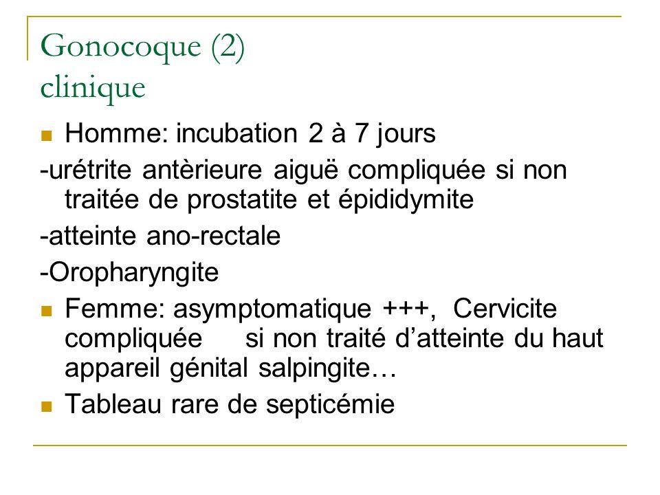 Gonocoque (2) clinique Homme: incubation 2 à 7 jours -urétrite antèrieure aiguë compliquée si non traitée de prostatite et épididymite -atteinte ano-r