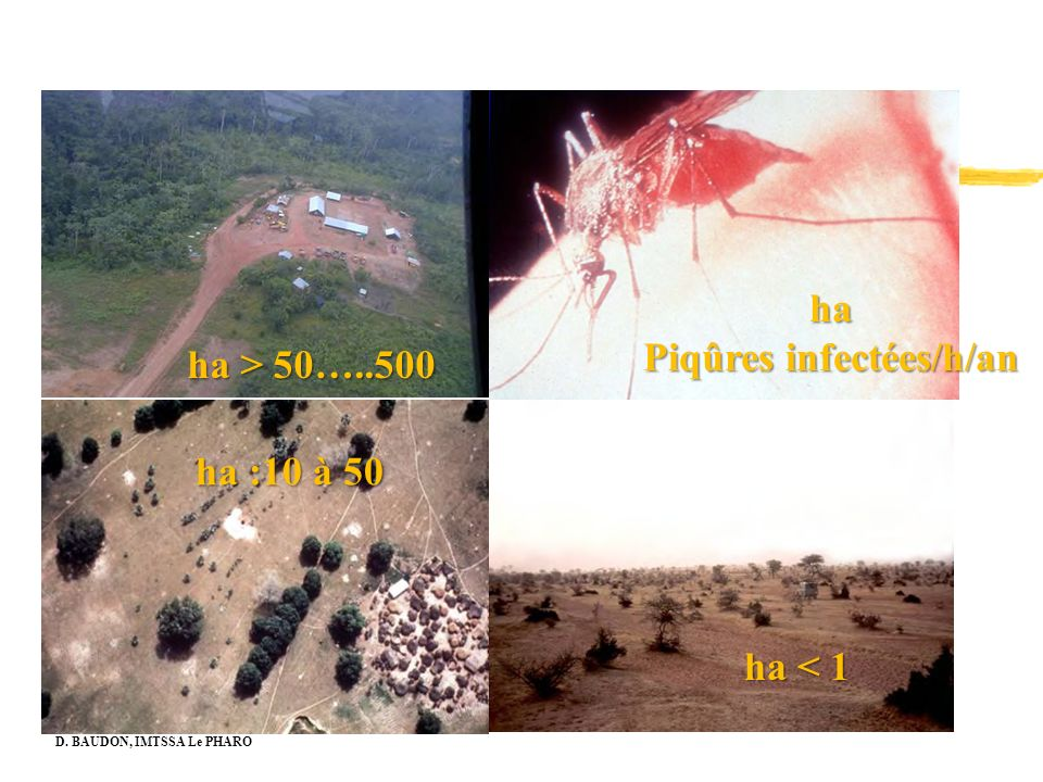 ha Piqûres infectées/h/an ha > 50…..500 ha :10 à 50 ha < 1 D. BAUDON, IMTSSA Le PHARO