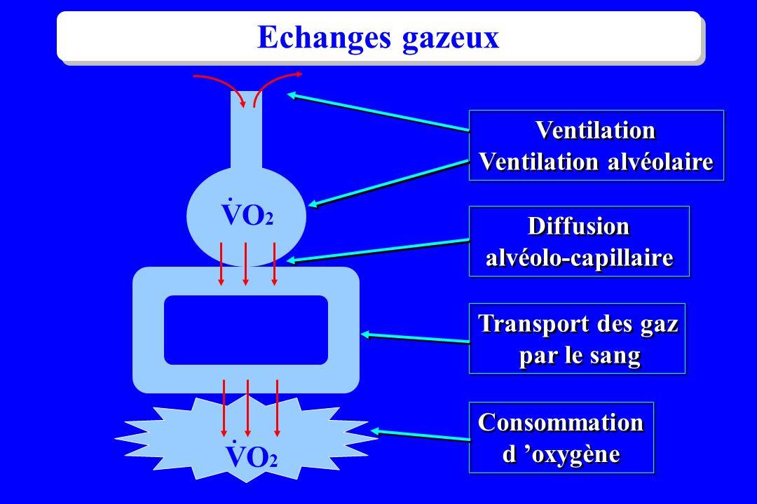 alvéole VO 2 Echanges gazeux Ventilation Ventilation alvéolaire Ventilation Ventilation alvéolaire Diffusion alvéolo-capillaire Diffusion alvéolo-capi