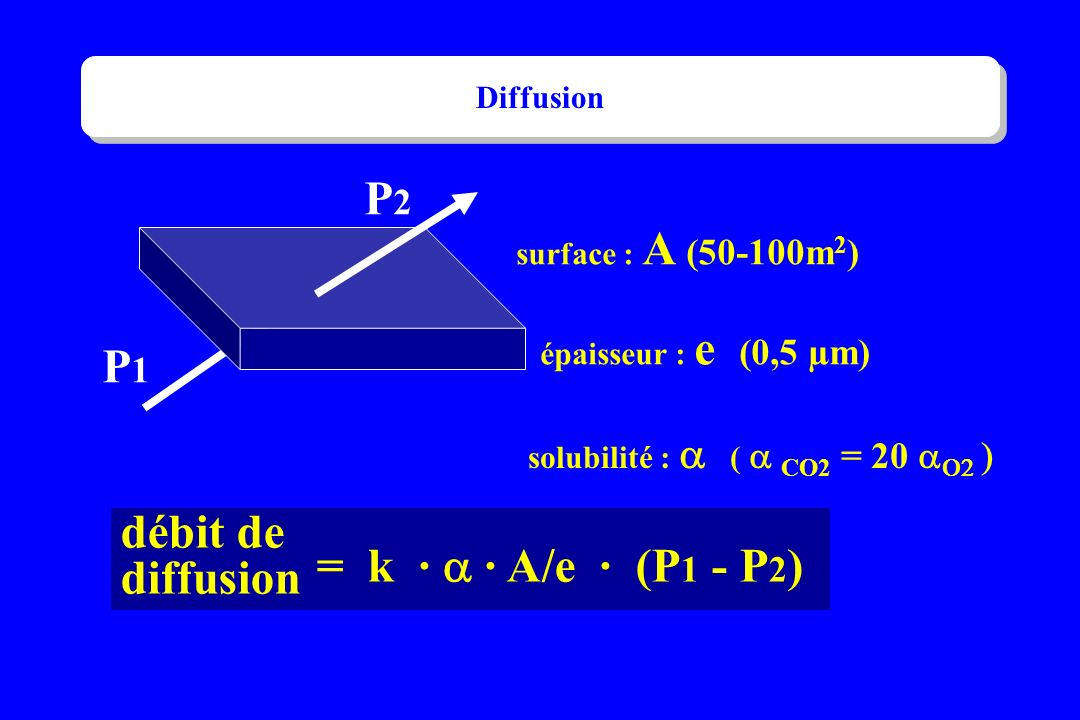 surface : A (50-100m 2 ) épaisseur : e (0,5 µm) P1P1 P2P2 débit de diffusion = k · · A/e · (P 1 - P 2 ) solubilité : ( CO2 = 20 Diffusion