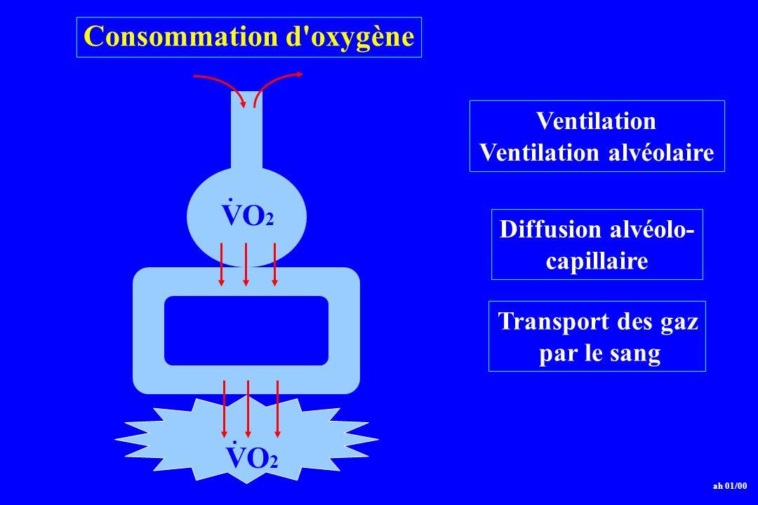 Ventilation Ventilation alvéolaire Diffusion alvéolo- capillaire Transport des gaz par le sang Consommation d'oxygène ah 01/00 alvéole VO 2