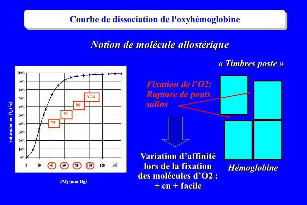 Courbe de dissociation de l'oxyhémoglobine 97.5 96 91 75 PO 2 (mm Hg) saturation en O 2 (%) « Timbres poste » Hémoglobine Notion de molécule allostéri