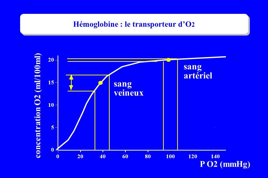 . P O2 (mmHg) sang artériel sang veineux 0 5 10 15 20 0 406080100120140 concentration O2 (ml/100ml) Hémoglobine : le transporteur dO 2