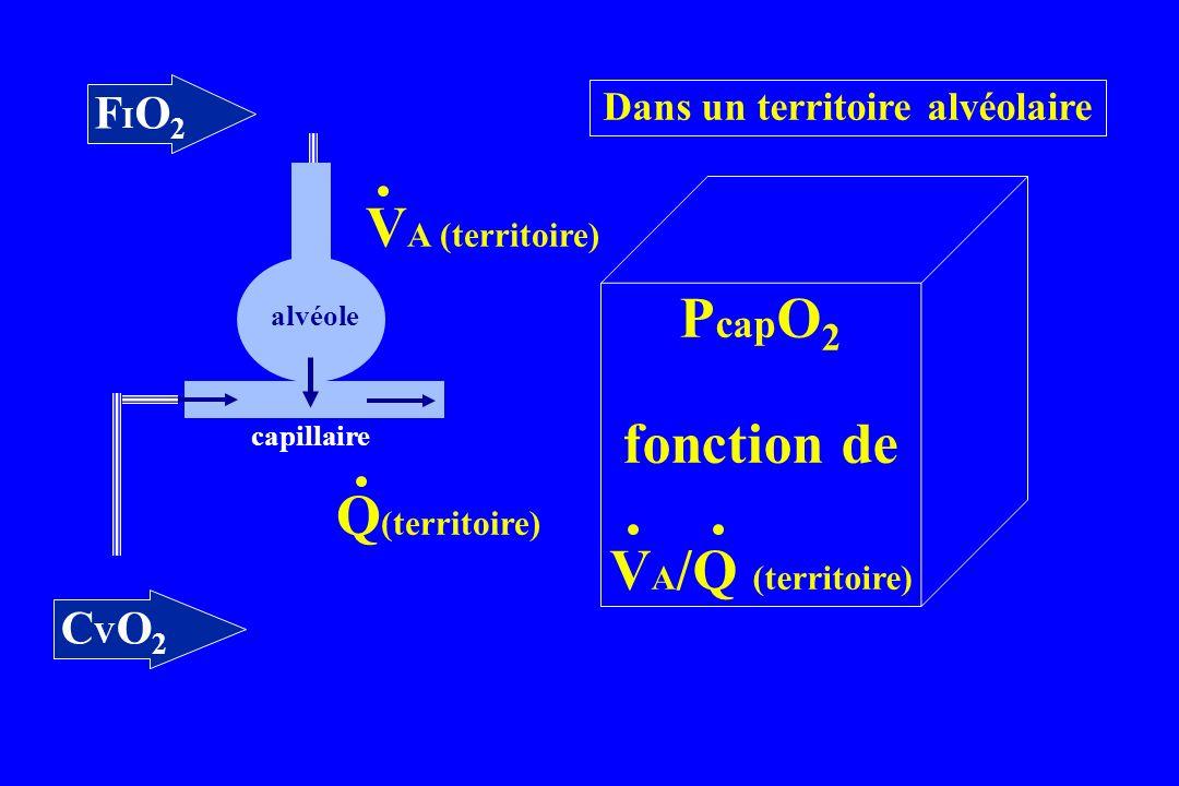 FIO2FIO2 alvéole capillaire CVO2CVO2 P cap O 2 fonction de V A /Q (territoire) Dans un territoire alvéolaire V A (territoire) Q (territoire)