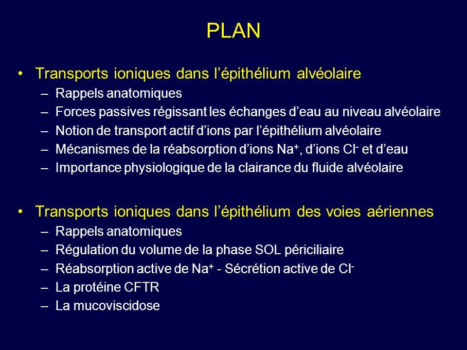 PLAN Transports ioniques dans lépithélium alvéolaire –Rappels anatomiques –Forces passives régissant les échanges deau au niveau alvéolaire –Notion de