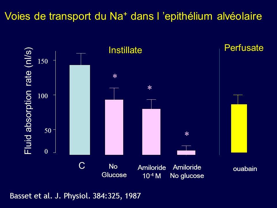 150 100 Fluid absorption rate (nl/s) No Glucose 50 0 C Amiloride 10 -4 M * * * Voies de transport du Na + dans l epithélium alvéolaire Basset et al. J
