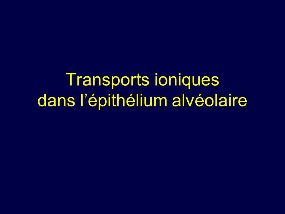 Importance du transport ionique transépithélial alvéolaire .