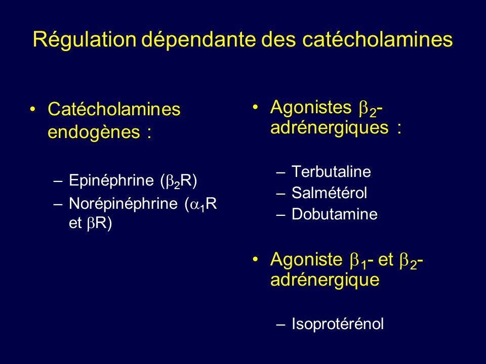Régulation dépendante des catécholamines Catécholamines endogènes : –Epinéphrine ( 2 R) –Norépinéphrine ( 1 R et R) Agonistes 2 - adrénergiques : –Ter